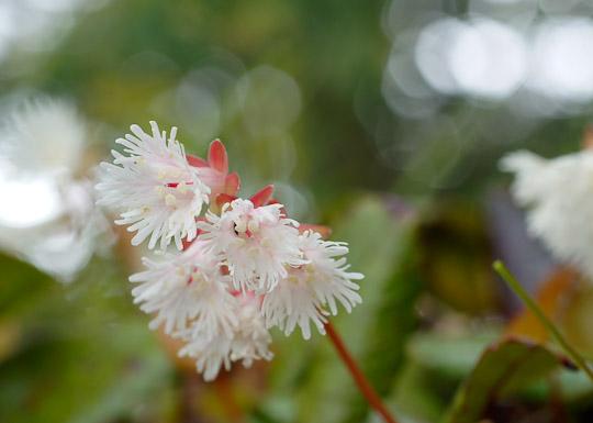 山の花・森-2