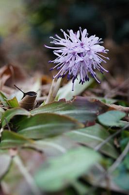 春山の花-05024
