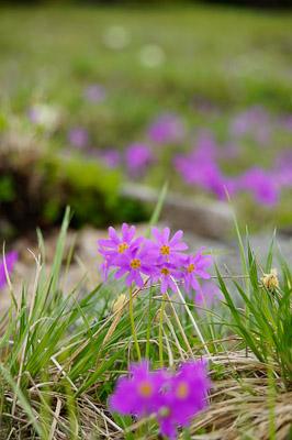 春山の花-5